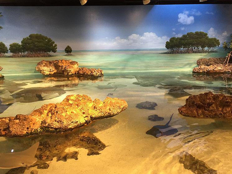 aquario-em-boston-arraias2
