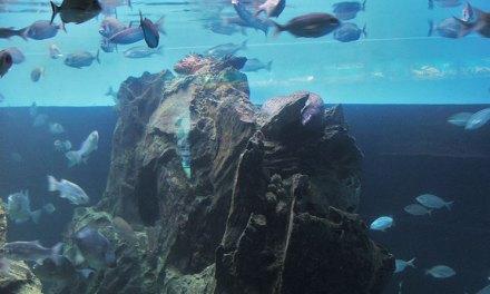 L'aquàrium, o lindo aquário de Barcelona