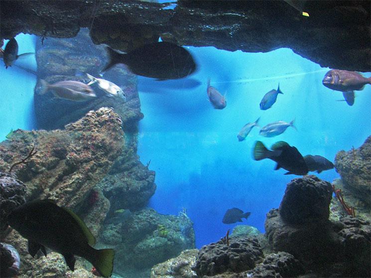 aquario-de-barcelona-9