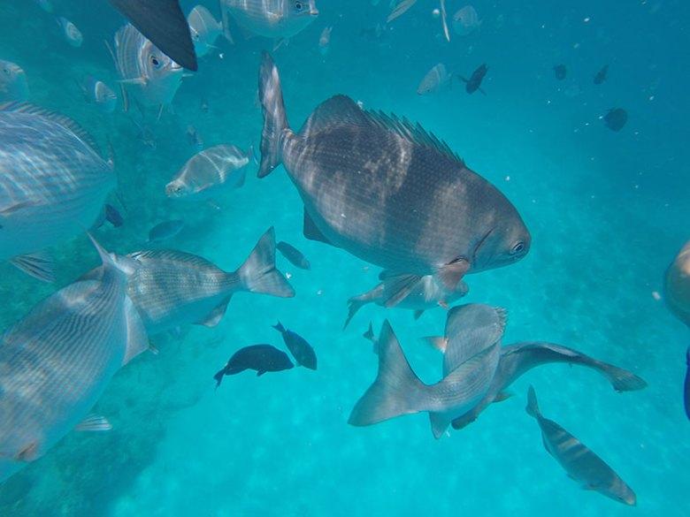 Peixes em San Andrés