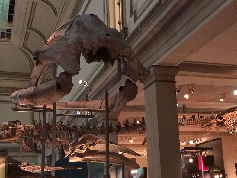 Museu de História Natural em Washington DC