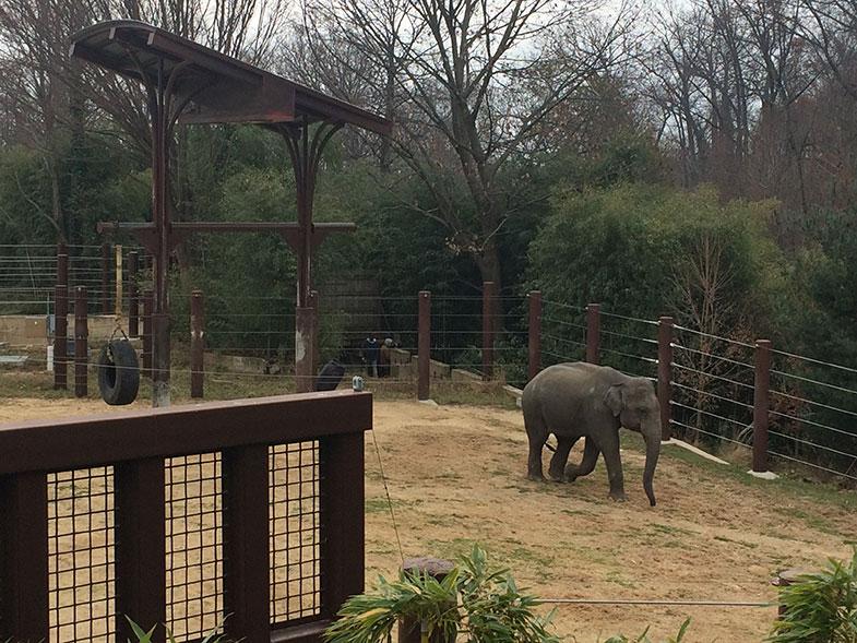 Zoológico de Washington DC
