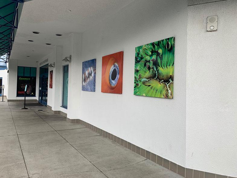 Aquarium of the Bay em San Francisco