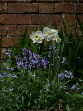 Jonquils, Bluebells and Forget-Me-Nots