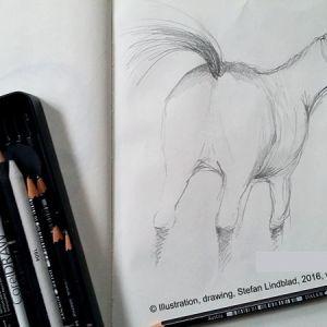 Illustratör Stefan Lindblad, teckning, blyerts, häst, hästhage i Sorunda, Stockholm 2015
