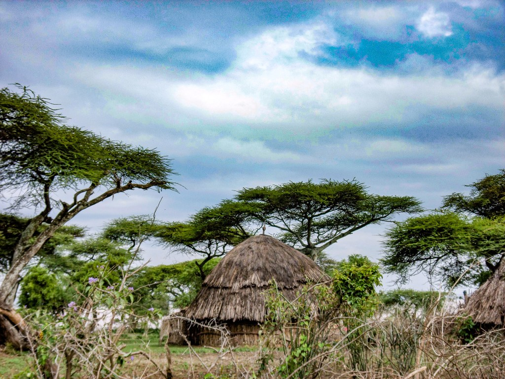 Acacia Trees in Lake Langano, Ethiopia