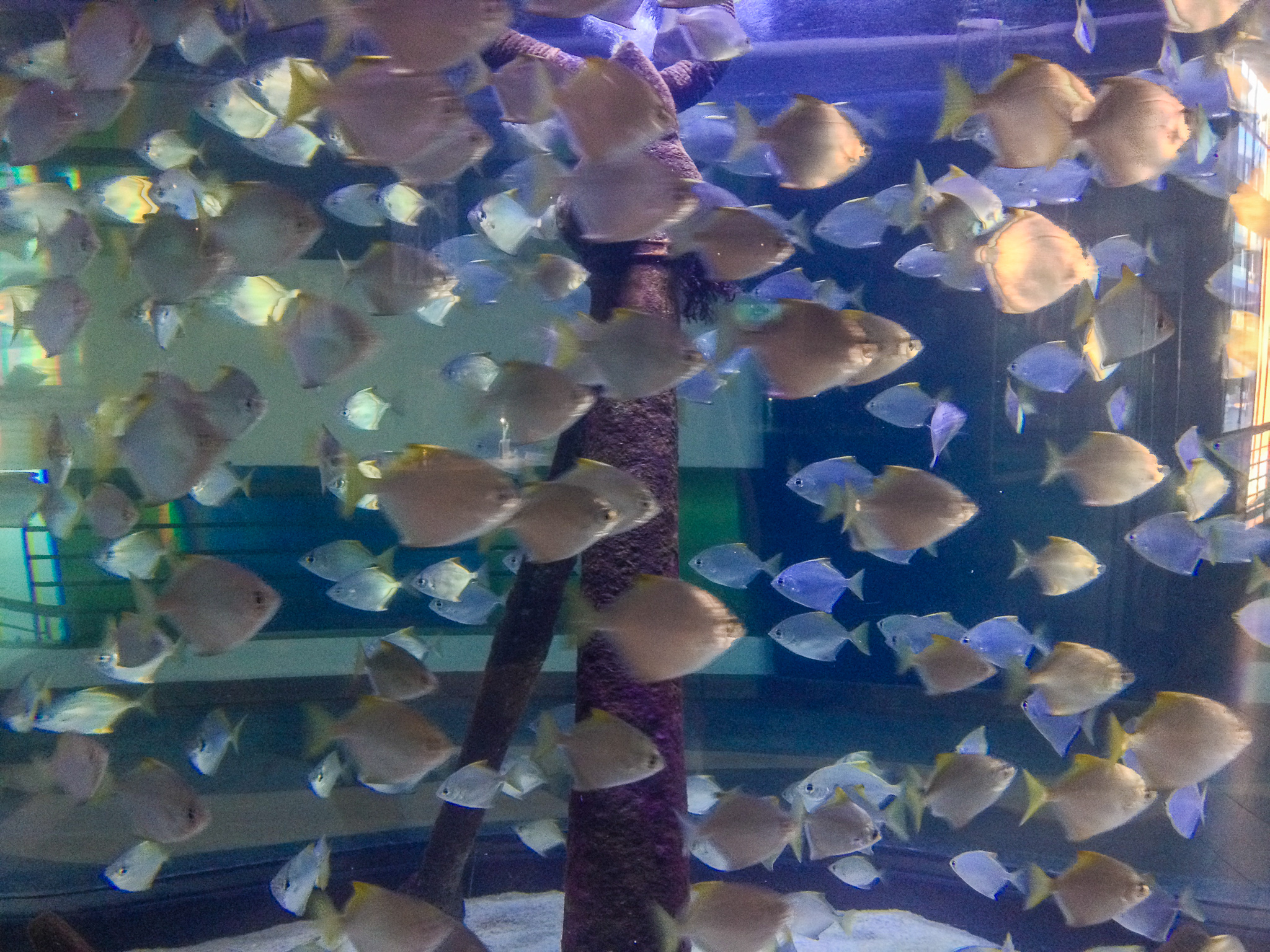 Two Oceans Aquarium - Cape Town