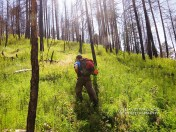 Eric walks though new growth through a charred area from the 2014 Slide Fire.
