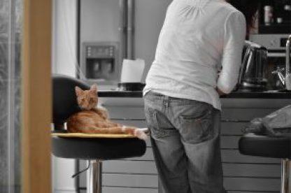 Sinais de que o gato gosta do seu dono.
