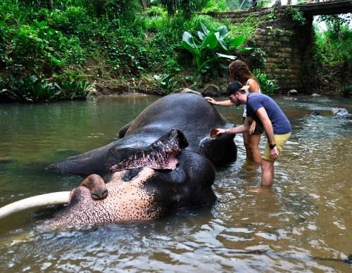 J+330 Laver et monter sur un éléphant !