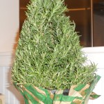rosemary tree from Whole Foods Market by Capability Mom Blog
