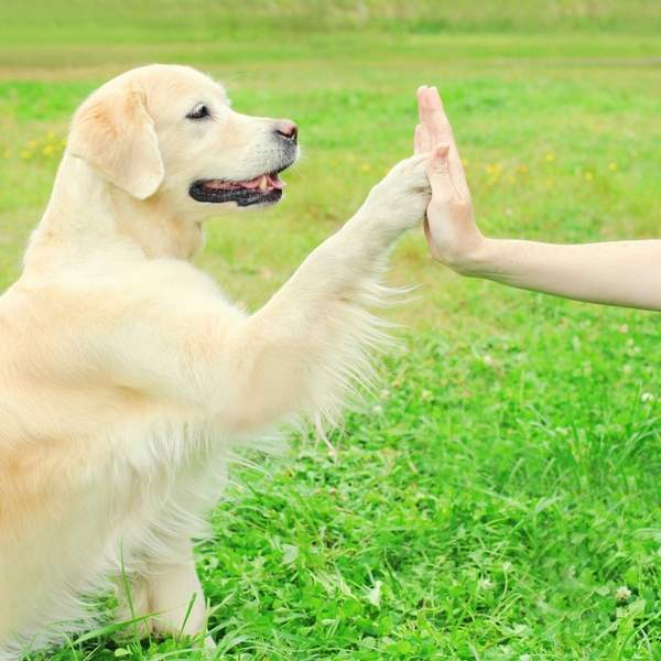Dog and trainer high five, outdoors- Getting an adult or rescue dog
