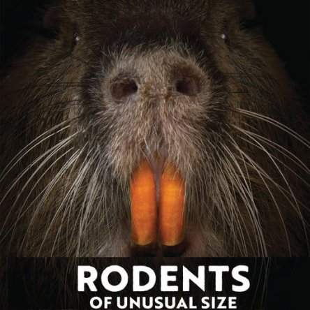 rodents_of_unusual_size