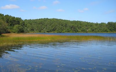 WBUR: Cape Cod Water Quality In Decline, Report Says