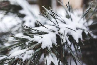 cold-snow-nature-winter-medium