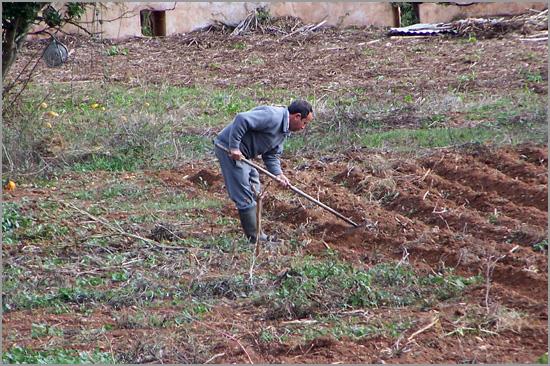 Agricultor - Capeia Arraiana