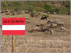 Zona Caça Municipal - Sabugal