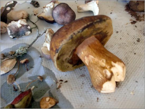 Convívio Micológico na Malcata - Capeia Arraiana