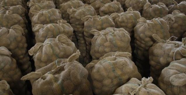 Há 100 anos a escassez de batata era preocupante