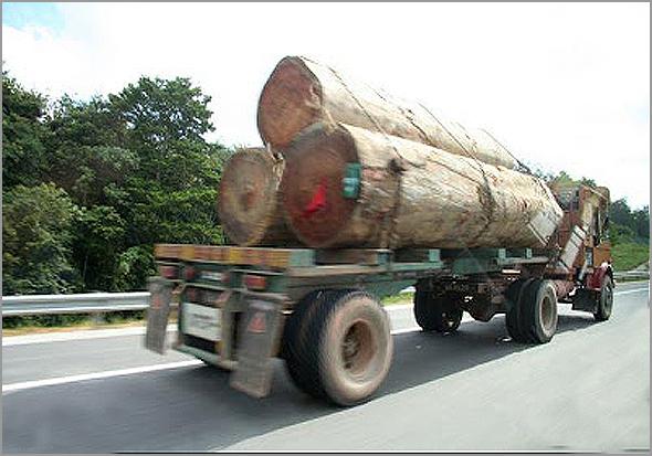 Camião de madeireiro com troncos gigantescos - Capeia Arraiana