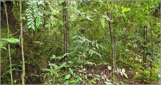 Área de Conservação Transfronteiriça de Maiombe - Capeia Arraiana