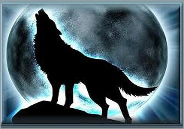 A noite dos lobos