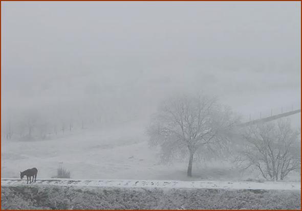 Jarmelo com neve em manhã de nevoeiro