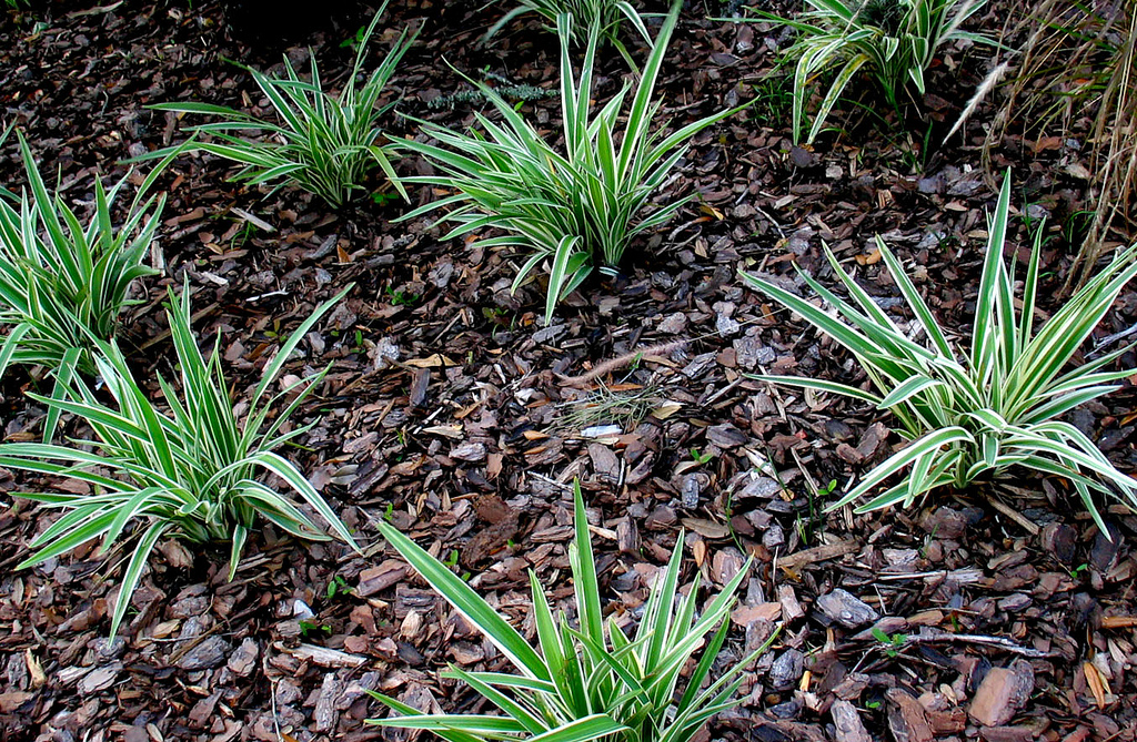 Image of mulch and plants