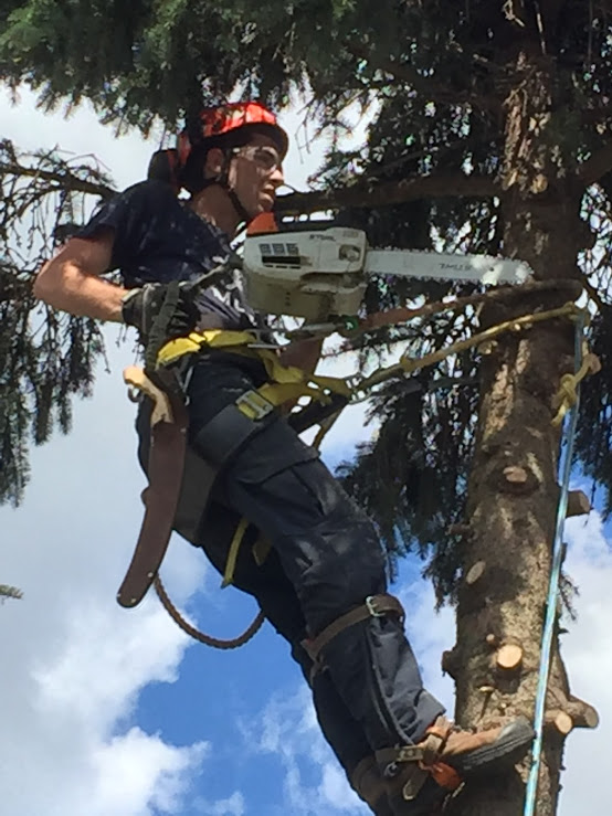 Capella Tree Service