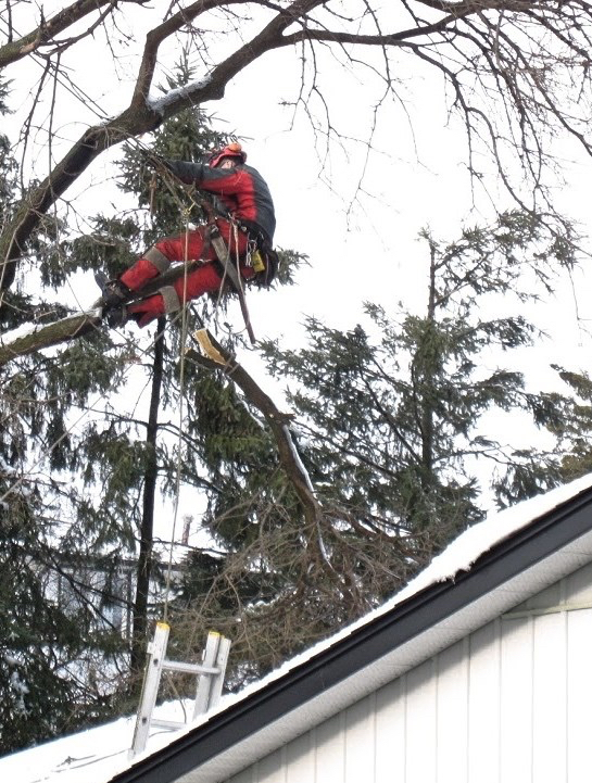 Capella Tree Service Guelph Winter