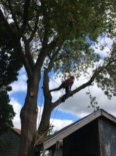 tree-service-waterloo
