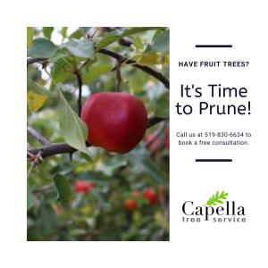 Fruit Trees Guelph