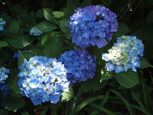 garden-blue