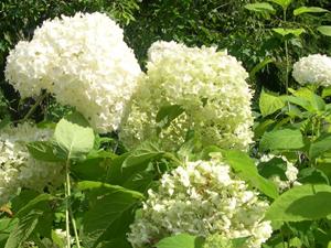 garden-white