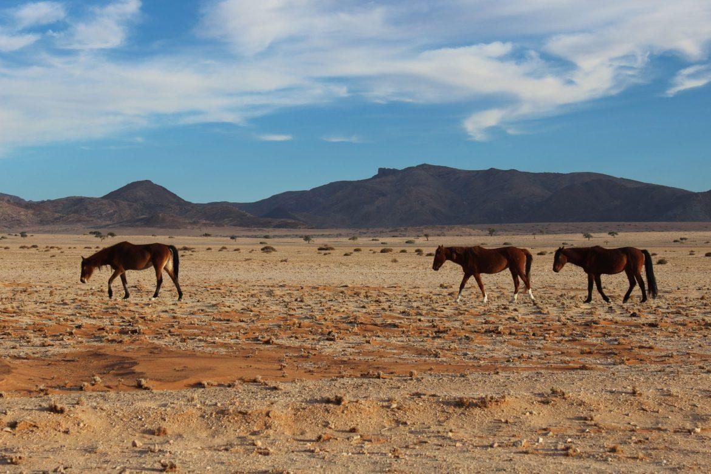 wild-horses-of-klein-aus