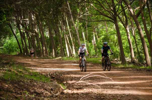 Tokai Forest (Image: Supplied)