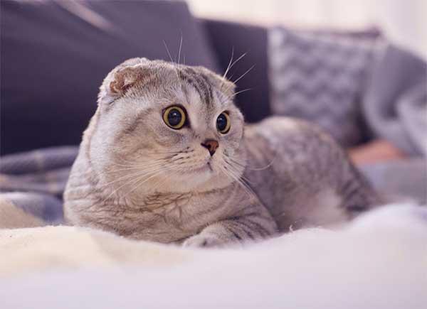Top 25 Sự Thật Thú Vị Về Mèo Có Thể Bạn Chưa Biết   SaleNhanh.com