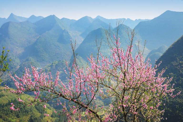 Mùng 1 Tết Canh Tý 2020: Du xuân lên cao nguyên đá xem 'đá nở hoa' | Du  lịch | Thanh Niên