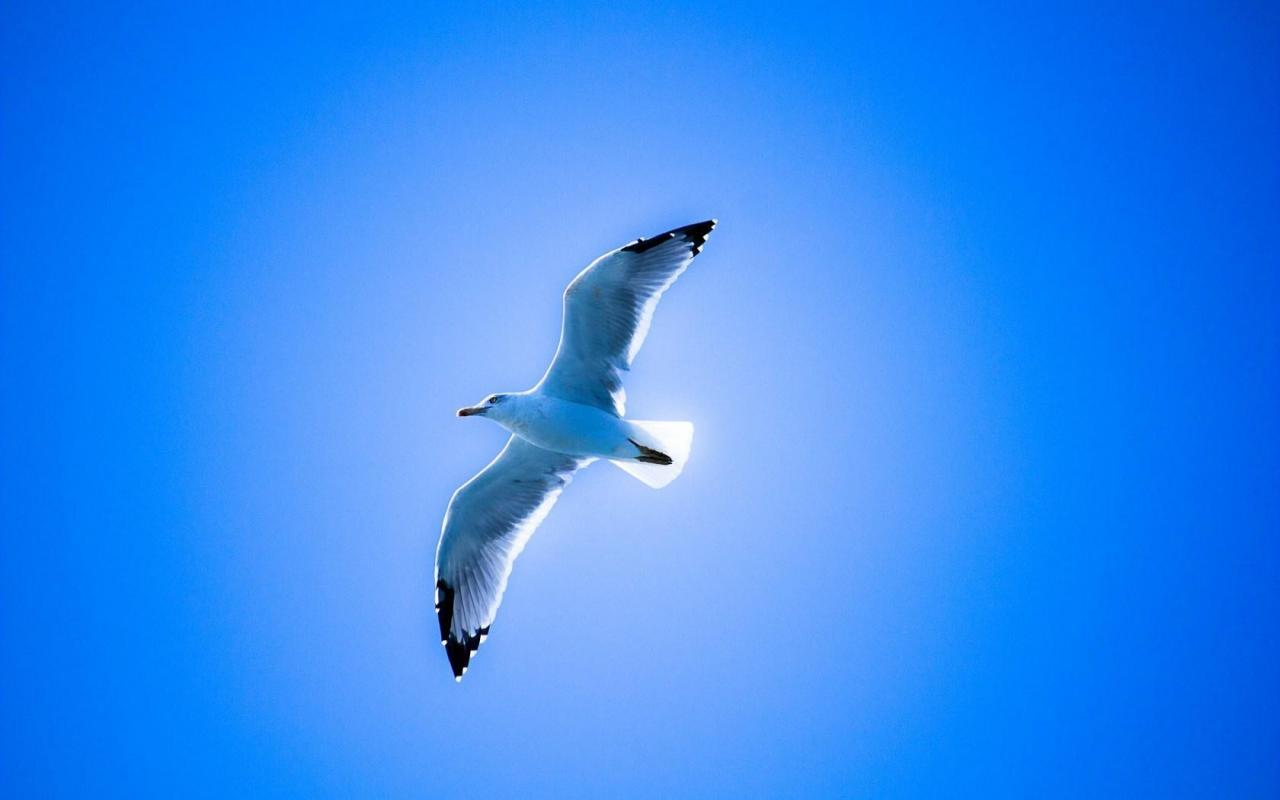 Tuyển chọn hình nền các loài chim đẹp nhất thế giới
