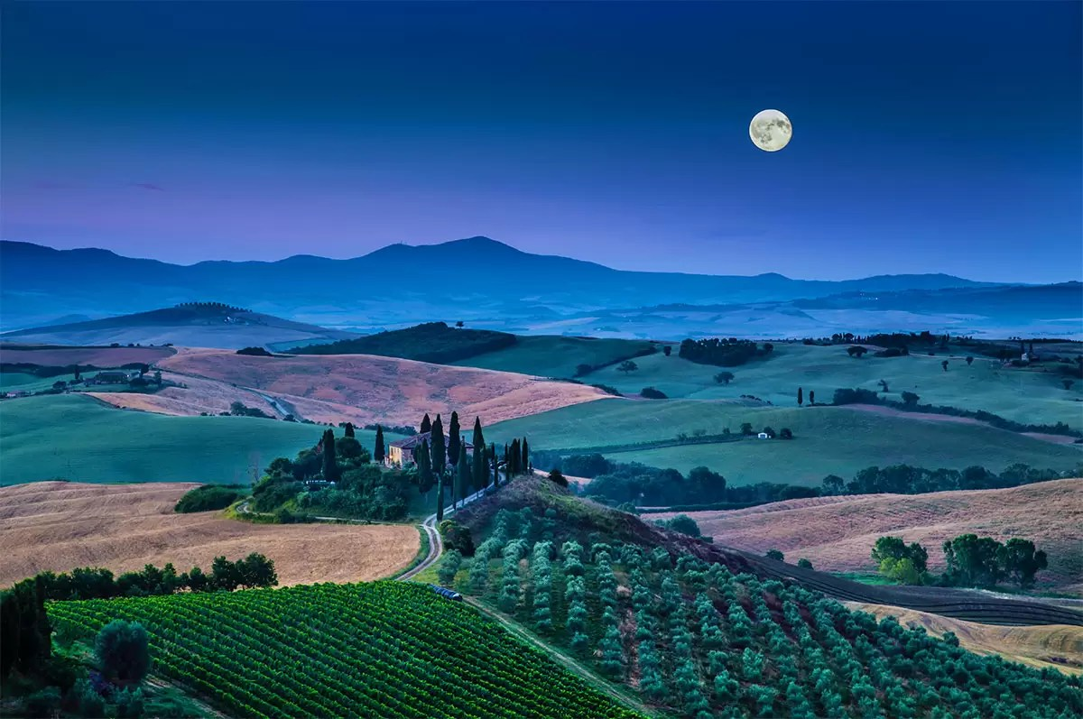 Moonlit Vineyard
