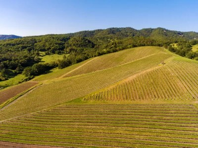 Umpqua Valley Vineyard