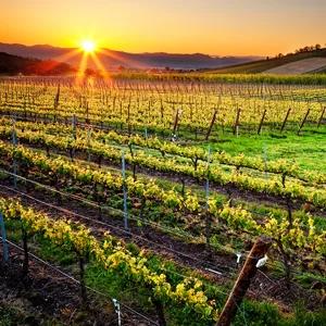RoxyAnn Winery Vineyard