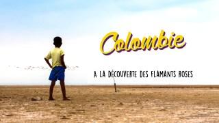 Défi 10 : Découvrir et filmer des flamants roses - Colombie