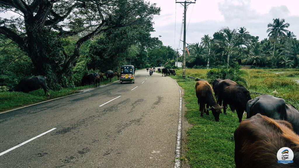 Les Routes cingalaises
