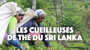 Rencontre improbable avec les cueilleuses de thé🍃du Sri Lanka