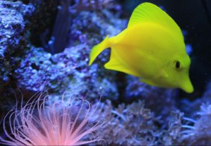 fish tank cleaners maintenance leesburg ashburrn