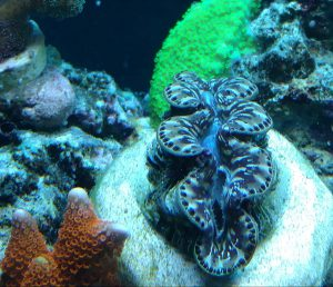 reef coral frag stores virginia