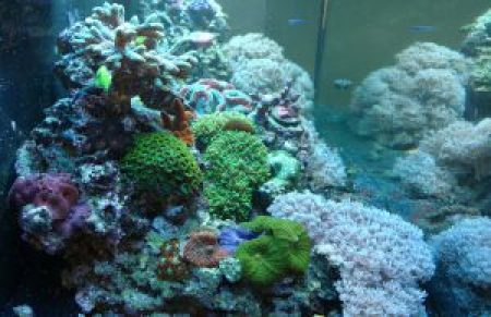 aquarium coral reef frags sale stores northern virginia