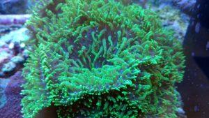 aquarium service northern va arlington alexandria