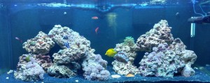 saltwater aquarium stores northern virginia ca